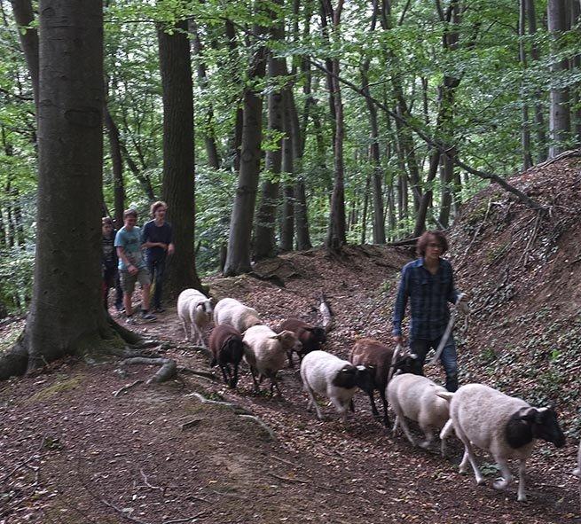 Schafwanderung in den Odenwald 8