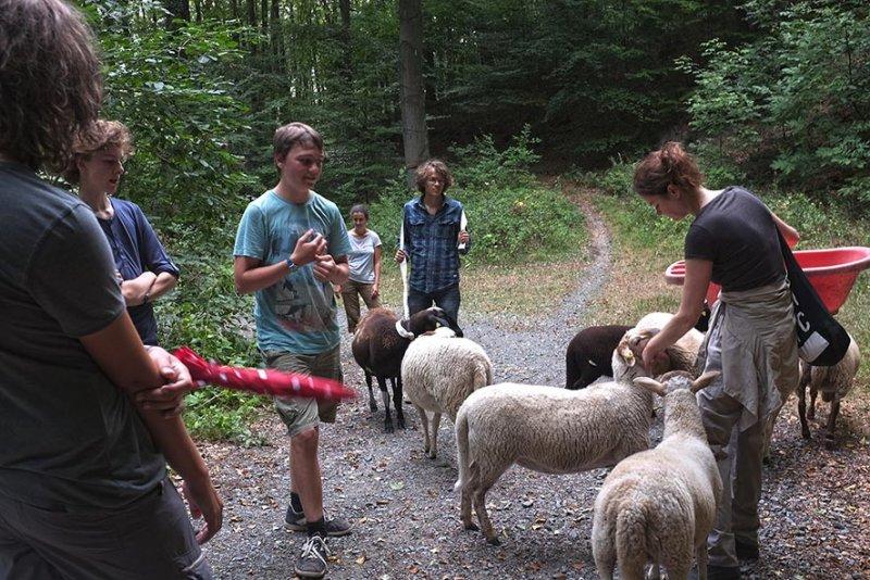 Schafwanderung in den Odenwald - Rast 7