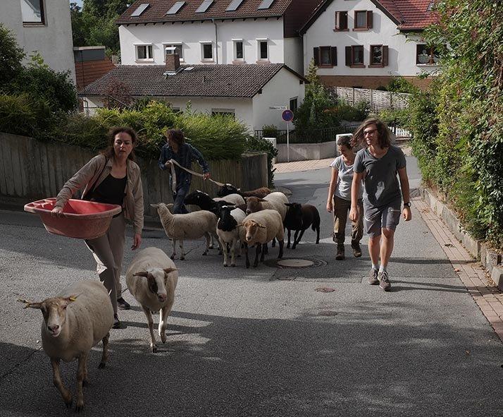 Schafwanderung Makchen 2