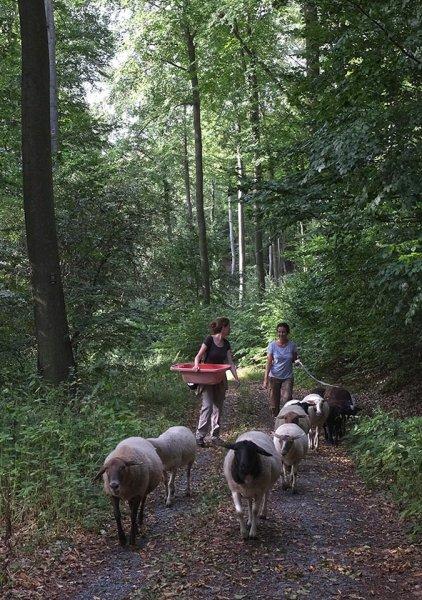 Schafwanderung in den Odenwald 20a 10x14s