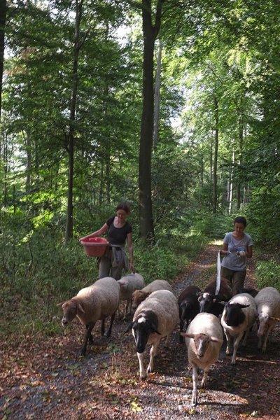 Schafwanderung in den Odenwald - Wühlmaushotel 3