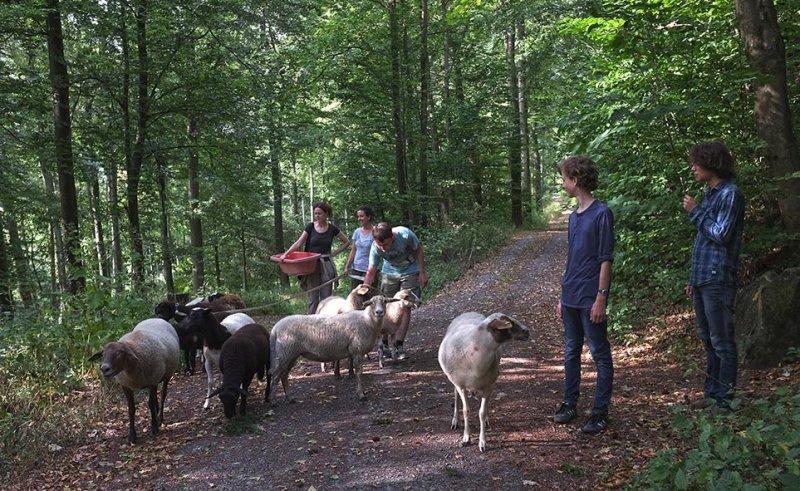 Schafwanderung in den Odenwald - Wühlmaushotel 2