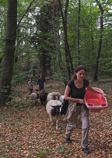 Schafwanderung in den Odenwald 1