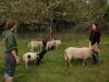 Schafgruppe 2