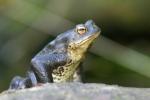 Die ersten Amphibien sind unterwegs