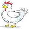 Hühnerwagen nimmt Gestalt an