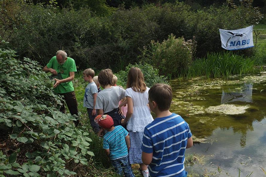 Aussetzaktion Laubfrösche am Hermelinweiher - Ab in die Büsche 5 small