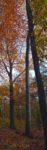 Naturschutzverbände begrüßen Naturwälder