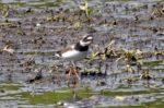 Die 149ste Vogelart in der Landbachaue