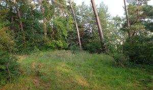 Lichtung im Wald an der Odenwaldstrasse mit vielen Rote Liste Arten