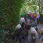 Schafgruppe unterwegs