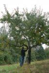 Baumschnitt im Stettbacher Tal