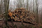 Holzeinschlag im Naturschutzgebiet