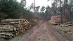 Holzlager im Naturschutzgebiet