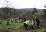 Gießpaten für den Kirschgarten gesucht