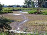 Geringer Wasserstand in der Landbachaue