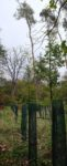Begehung im Darmstädter Stadtwald