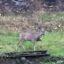 Wildbeobachtung im Vorgarten