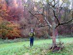 Abschlussarbeiten beim Obstbaumschnitt im Stettbacher Tal