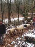 Schafwanderung
