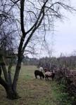 Von Weiden und Schafen