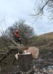 Baumfällarbeiten am Mittelbachteich