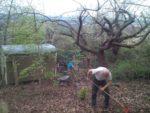 Wir schaffen eine kleine Baumschule