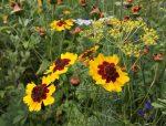 Blütenpracht auf den Etzwiesen
