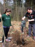 Elsbeeren und Kirschbäume - Einsatz im Alsbacher Wald