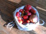 Apfelernte mit den Waldwölfen
