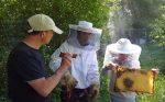 Gefüllte Honigräume