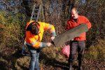 Abbau von Steinkauzkästen bei Hähnlein