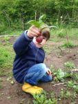 Wildkräuterstreifzug durch den Wühlmausgarten