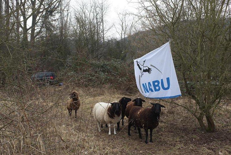 NABU-Schafe-1