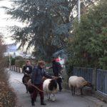Wanderung mit Schafen