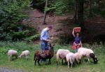 Waldwanderung mit den NABU-Schafen