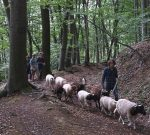 Schafwanderung in den Odenwald