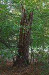 Krötenzaun und Biotopbäume