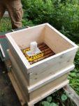 Varroa-Behandlung und letzte Ernte