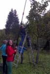Apfelernte-auf-den-Etzwiesen-05