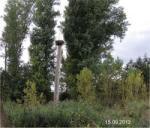 Der Horstbaum ist umgebrochen
