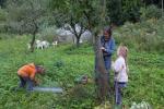 Schafgruppe: Vorbereitung der Schafweide auf den Etzwiesen