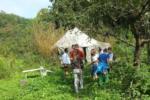 Bienengruppe auf den Etzwiesen
