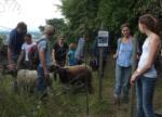 Schafe werden umgestellt