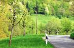 Pflege von Hochstämmen im Stettbacher Tal