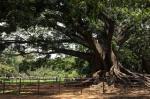 Magische Bäume auf den Etzwiesen