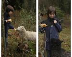 Initiativgruppe Schafhaltung