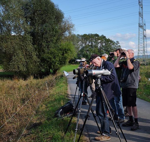 Landbachaue - Birdwatching 09