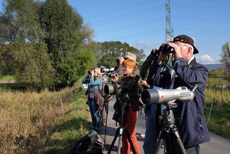 Landbachaue - Birdwatching 10