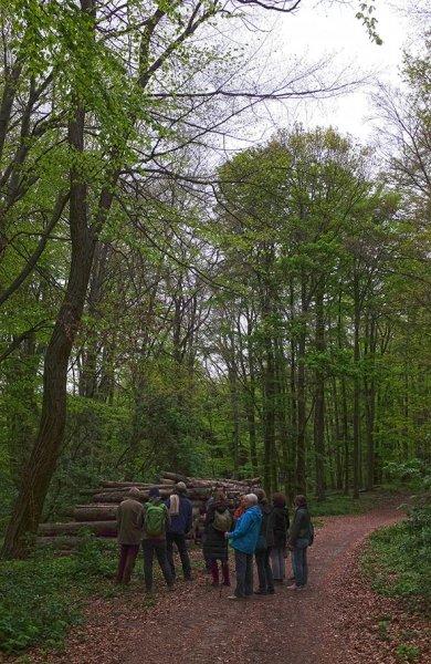 Vogelstimmenwanderung - Wald